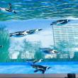 2017.01.09 池袋 サンシャイン水族館: 空飛ぶペンギン!