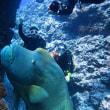 琉球海炎祭・粟国遠征 沖縄ダイビング 那覇シーマリン