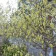 高知城の桜等です