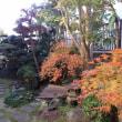 我が家の庭は紅葉真っ盛り