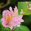 花彩々 一雨毎に秋が来る 2
