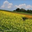 花の丘陵Ⅱ