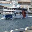 神戸港のユリカモメ(H29.11.17)(177種目の1)