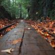 秋の屋久島