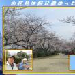 早々と花愛でる 「お花見は桜公園ゆったりと」