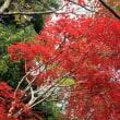 武蔵丘陵森林公園から嵐山渓谷のモミジ模様