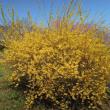 マッキーの『四季を楽しむ』: 桜満開で春爛漫