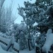 1月14日雪の中、ご来店ありがとうございました