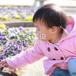 fotolia:「1歳の女の子とパンジーの花」
