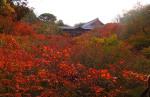 紅葉終盤の東福寺