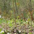 山菜の年、草を観つめ直す年