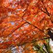 猿橋の紅葉