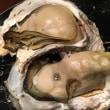【千葉県  九十九里で取れた「岩牡蠣」】