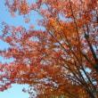 11月前半の紅葉