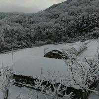 初雪でした。