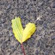 ハートの葉っぱ