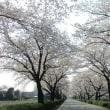 『 春風や19のわれのいまも行く 』物真似575春zqx1005
