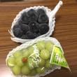 2018年9月21日(金)日本の果物は世界一(三次のぶどう)