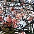 もうすぐ~春ですね!!