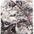 君は上野で猫と謎のゆるキャラをみたか(情報求ム!)