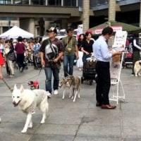 1809- 犬たちの集会