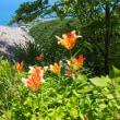 小樽海岸自然探勝路 2018年6月