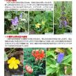 【自然情報紙】八幡平NOW8月2号を発行しました。