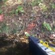 紅葉の美々川ツアー