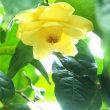 温室の花達