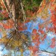 秋から冬へ。