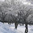 雪の花が!