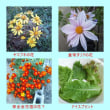 山ブキの花