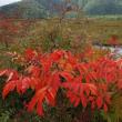 秋風がささやく尾瀬(1)~草紅葉どこまでも~