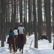 冬!!森や丘を巡る 乗馬体験<ノースポールスティブル>