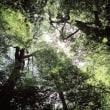 良い天気の森