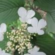 横浜英和20 「キャンパスの花」
