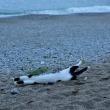 砂浜背伸び~