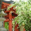 卯の花・住吉神社。 大阪市
