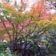 空中庭園の紅葉