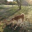 平和公園午後散歩 181113