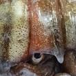 北海道広尾「松川がれい」!数量限定「真いか」「すみいか」「やりいか」!!刺身と手作り干物の専門店「発寒かねしげ鮮魚店」。