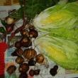 秋の営農#7 - 心配した白菜は小粒だがなんとか !!!