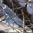 公園の冬鳥