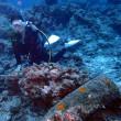 のんびりダイビング。沖縄ダイビング 那覇シーマリン