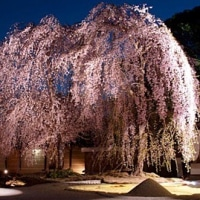 京都東山花灯路★高台寺・清水寺ライトアップ まもなく開始!