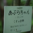軽井沢町植物園 ♪  其の一。