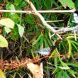 『花水川の野鳥』 四十柄