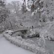 """雪の花咲く""""香雪園""""..."""