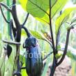 fotolia:「成長中のミニトマト」 / 「なすの成長」