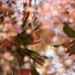 落ち葉と水面の映り込み